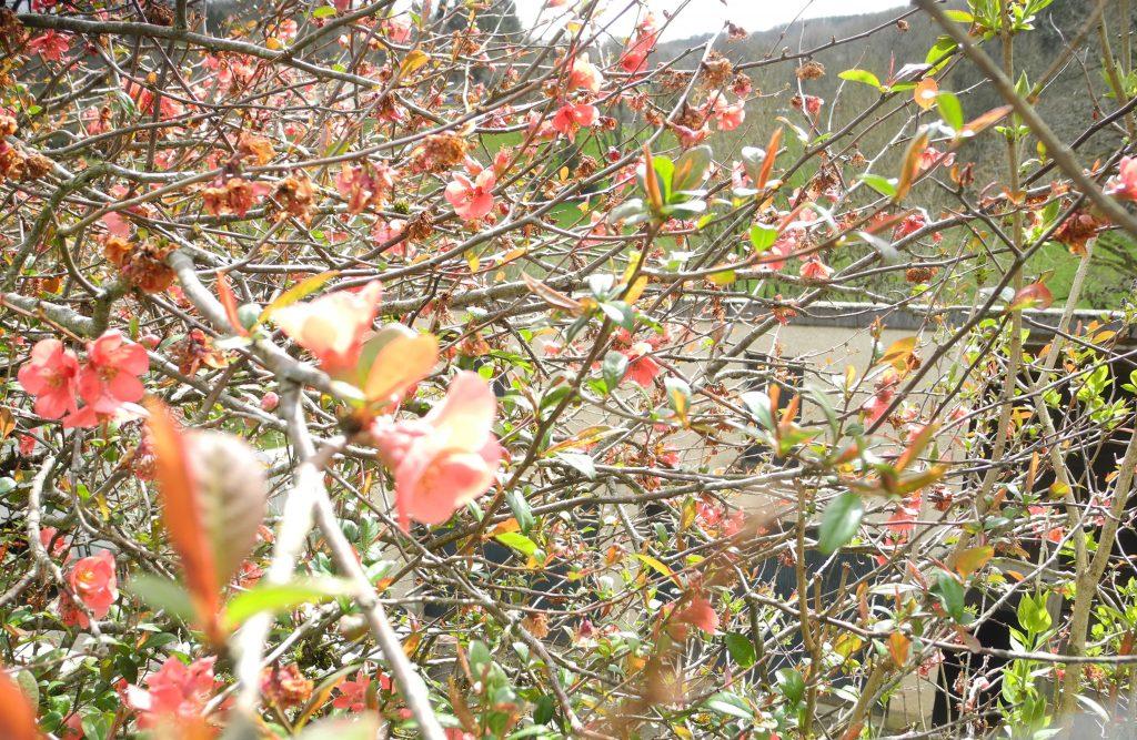 haie fleurie au Centre Espérance