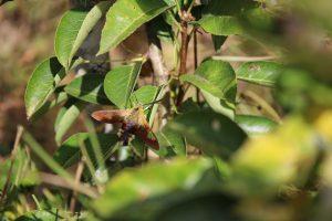 nature et insectes, un endroit serein pour travailler sur soi