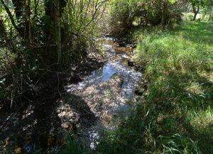 rivière au bas du terrain