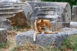 chat souple hatha yoga